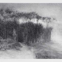Copse Powdered charcoal on paper 17.75 x 25.5""