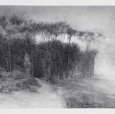 """Copse Powdered charcoal on paper 17.75 x 25.5"""""""
