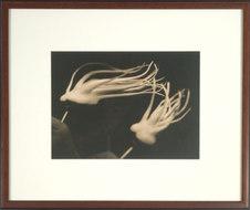 "Distortion Flower #2 Toned silver gelatin print 16.75 x 20"" MC 1071"