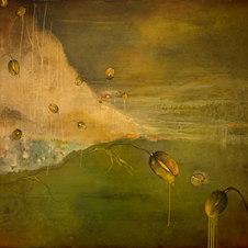 "Arctic Poppies XVIII Oil on canvas 48 x 54"""