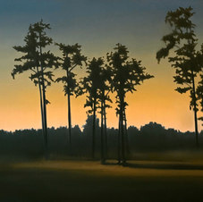 """Glowing Pines Oil on canvas 20 x 24"""" JC 1098"""