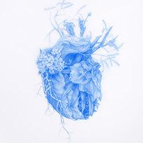 "Plants become Human Heart No. 2 Blue pencil on Mylar Mylar: 10 x 6.5"" Frame: 17.125 x 13.5"" ZL 1013"