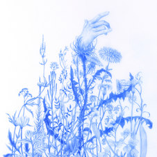 The Waiting, from Wildflowers Series Blue pencil on mylar 9.25 x 6.5""