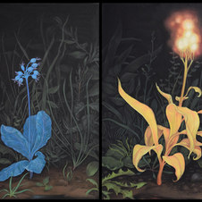 """Moonflower, Flower Mimics the Moon (left), Sunflower, Flower Mimics the Sun (right) Pastel on black paper Diptych, 18 x 12"""" each ZL 1025"""