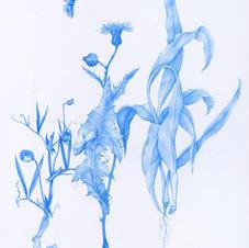 "Mimicry I, II & III Blue pencil on mylar 13 x 20"""