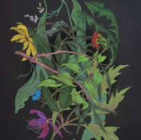 "Flowers Mimic a Black Hole Pastel on black paper 18 x 12"" ZL 1024"