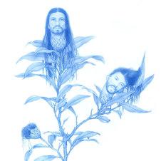 "Chrysantha, from Wildflower Series Blue pencil on mylar 8 x 10 3/4"" ZL 1011"