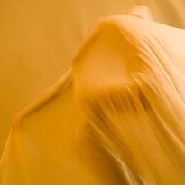 "Gold Dust Archival digital print 20 x 30"" HLZ 1023"