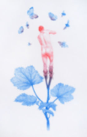 Fire_Flower1_SM.jpg