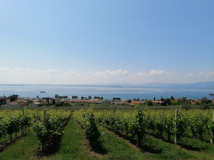Wine Guide Bardolino