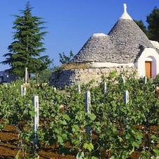 Puglia wijnreis