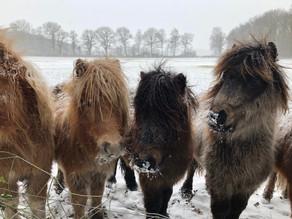 Olanda in inverno