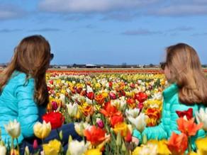 Visita il Parco dei Tulipani da casa tua