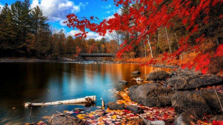 Algonquin provincial park מאת תומר