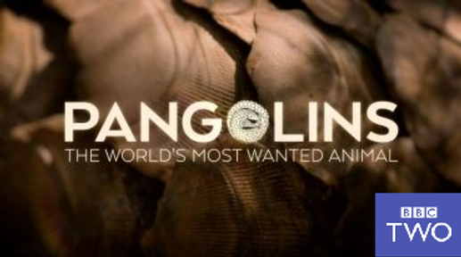 Pangolin Film