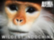 Langur Monkey Filming Laos Discovery Channel