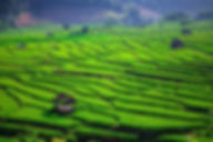 Rice fields Filming Thailand Chiang Mai