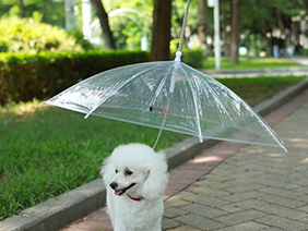 The best rain gear for your pup