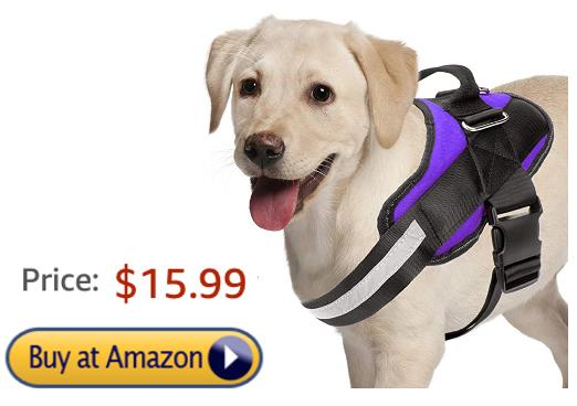 Noyal Dog Harness Review