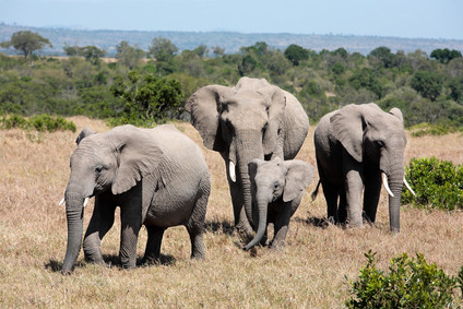Join the People Who Save Elephants