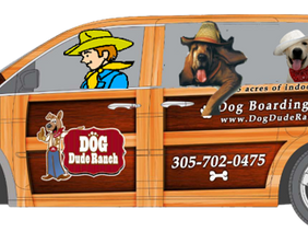 Downtown Dog Shuttle for Daycare or Boarding