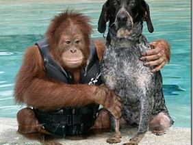 DOG AND ORANGUTAN FRIENDSHIP