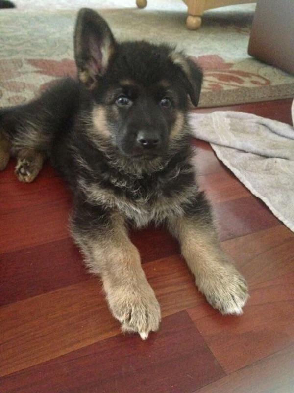 Szarik the miracle puppy