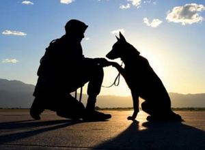 Rescue dogs with war heroes