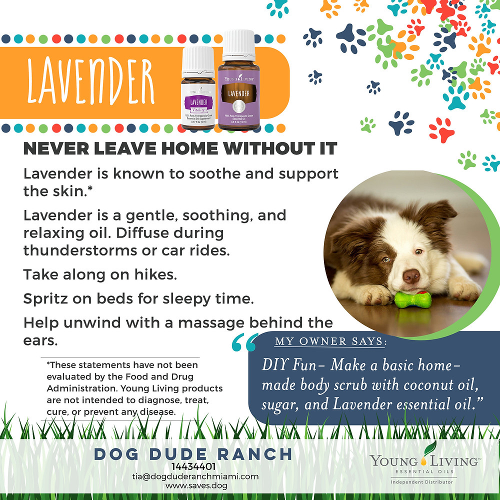Dog calming with lavender essential oil