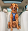 How To Keep Your Dog Safe On Car Journeys