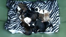 Yoshi's Rescue more puppies!