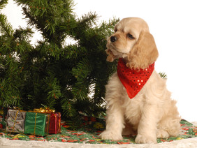 FUN HOLIDAY CARD IDEAS FEATURING YOUR FURRY FRIEND