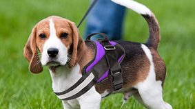 Our favorite harness