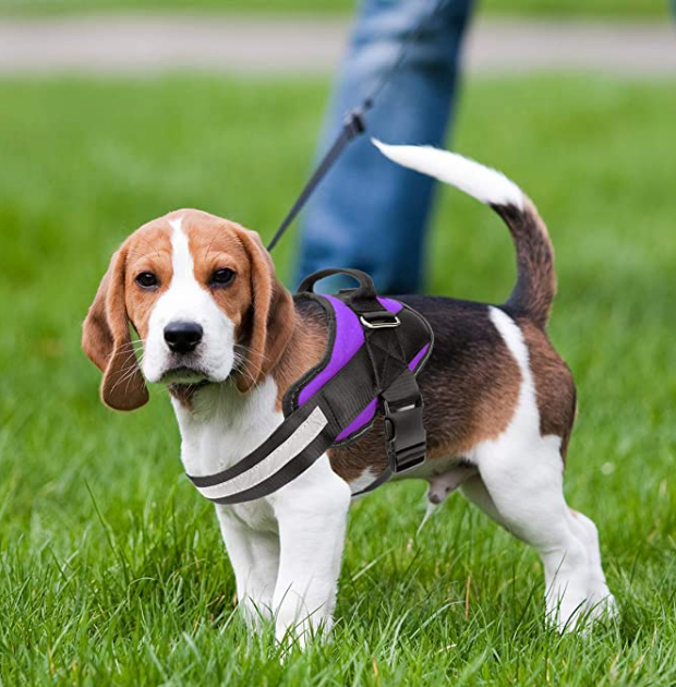 Dog Harness Review