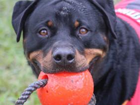 I got my ball!