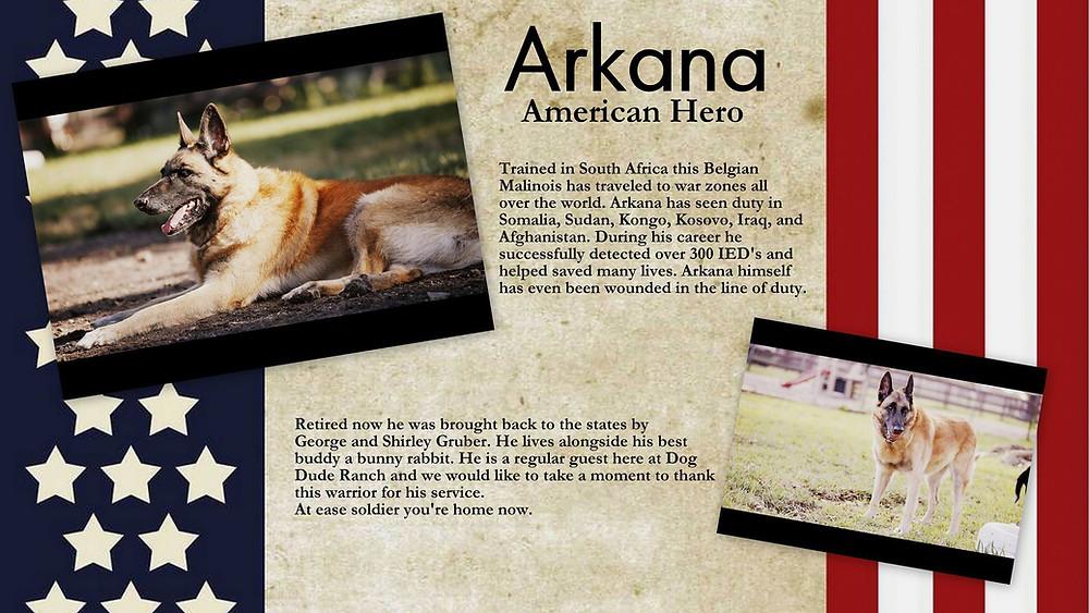 Arkana dog hero.jpg