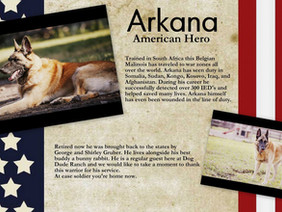 Great stories of dogs saving lives