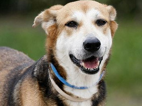 PLEASE HELP NENA FIND HER FOREVER HOME