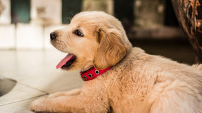 7 Affordable Ways Dog Owners Can Keep Their Homes Fresh