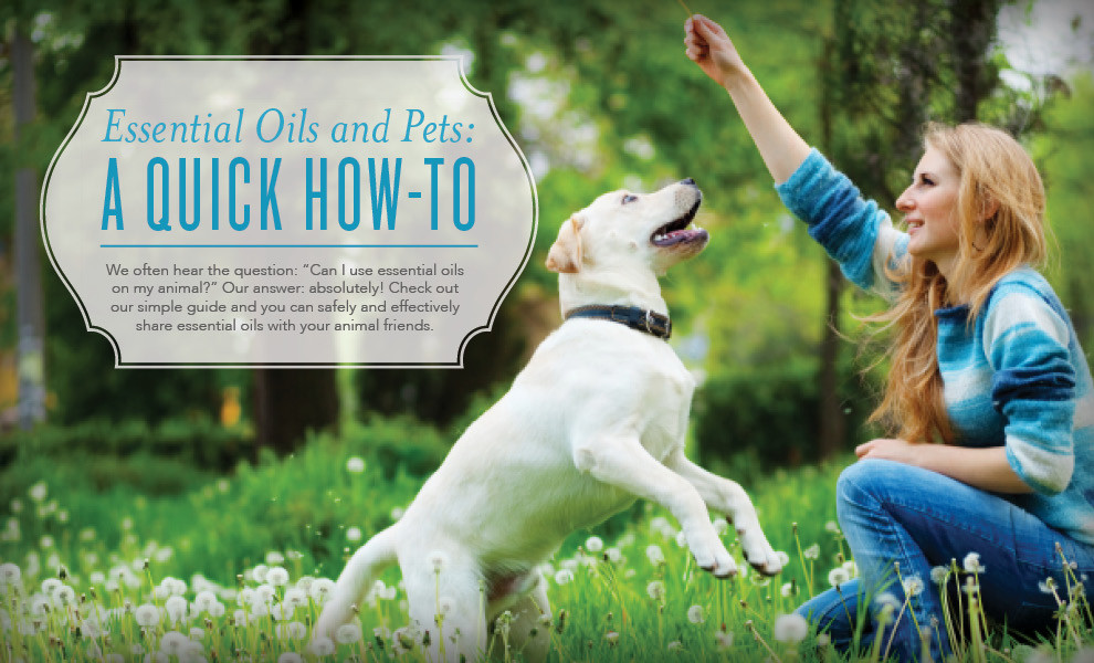 Animal Scents by Young Living Essential Oils for Dogs