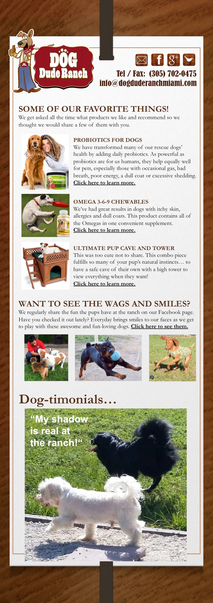 Dog Dude Ranch Newsletter
