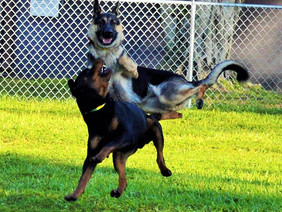 Some of our favorite funny pictures of dogs at play at the ranch