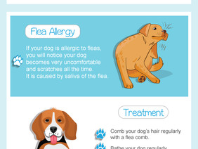 Understanding Allergies In Dogs