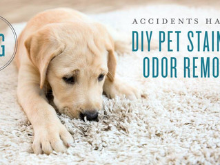 Accidents happen: DIY pet stain and odor remover