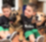 Adopt a dog: Barney