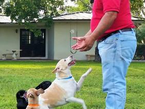 Dog's play vs. aggressive language