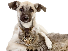 HUMANE CHARITIES FOR ANIMAL-LOVING HUMANS