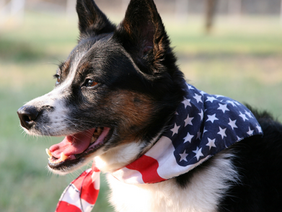 Dogs and fear of loud noises like fireworks and thunder