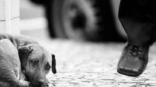 Sem centros de acolhimento, Salvador vive epidemia de animais abandonados