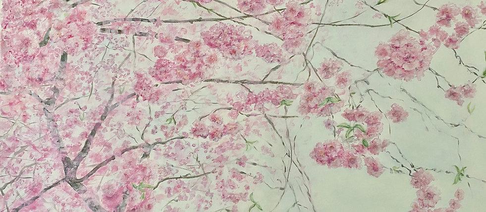 Et væld af kirsebærblomster.jpeg